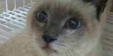 Após campanha, gato que perdeu pata em acidente em MT passa por cirurgia