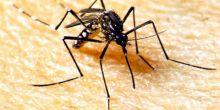Semana Nacional mobiliza população para eliminar focos do mosquito antes do período chuvoso
