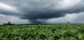 Em Campo Novo do Parecis, produtores aguardam consolidação das chuvas para o plantio da soja