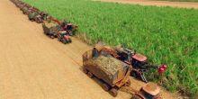 Pelo 2º ano consecutivo, Coprodia se destaca como a melhor empresa do Brasil no setor de açúcar e etanol