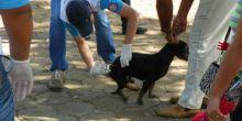 Campanha de vacinação antirrábica será neste sábado em Campo Novo do Parecis