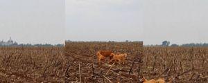 Cadela e 5 filhotes são abandonados em lavoura e causam revolta em Campo Novo do Parecis