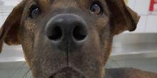 Cachorro que foi resgatado após ser jogado de viaduto morre em Cuiabá