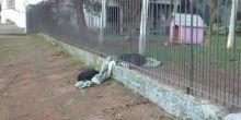 Cadela comove ao compartilhar cobertor com cão de rua