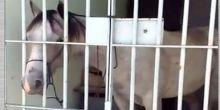 Cavalo é 'preso' e passa a noite em delegacia de Sergipe